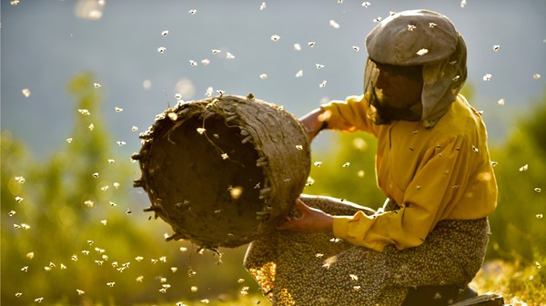 Bild zu THIS HUMAN WORLD: HONEYLAND